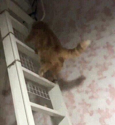 Enlace a Este gato ha aprendido a subir escaleras de una forma curiosa