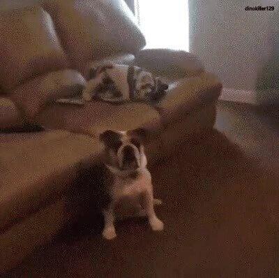Enlace a En esta vida hay dos tipos de perros