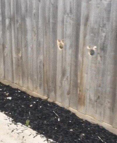 Enlace a El lugar favorito de dos perros para vigilar la casa