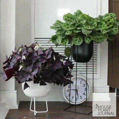 Enlace a Time lapse de unas plantas creciendo con el paso del tiempo