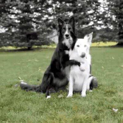 Enlace a Posad para la cámara como si fuerais los mejores amigos
