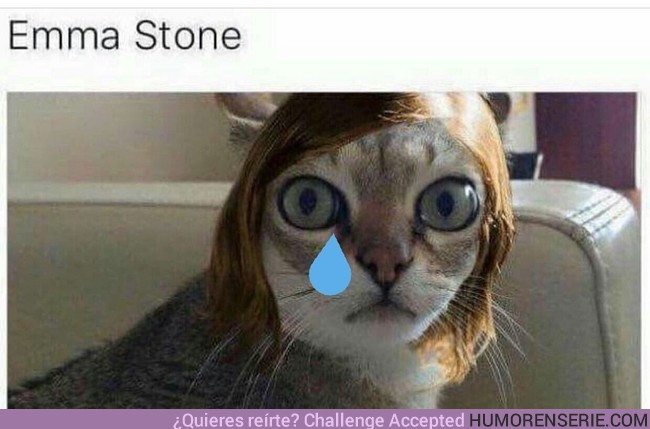 11167 - Si Emma Stone no hubiese ganado el Oscar