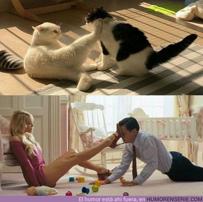 14610 - Gatos recreando la mejor escena de El lobo de Wall Street