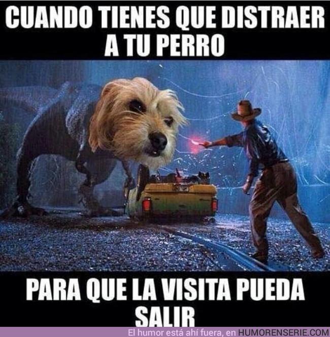 15607 - Quien tenga perro sabe que no es tarea fácil