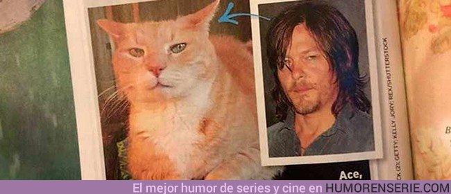 21784 - El gato que se parece a Norman Reedus se hace viral en las últimas horas