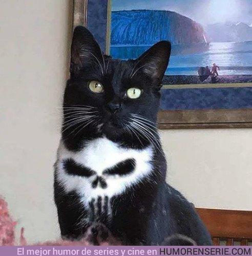 23987 - Con todos ustedes: El gato de Frank Castle