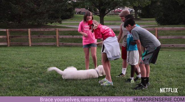 """30758 - Llega a Netflix """"Dogs"""", un documental para los que creen que la vida no tiene sentido sin perro"""