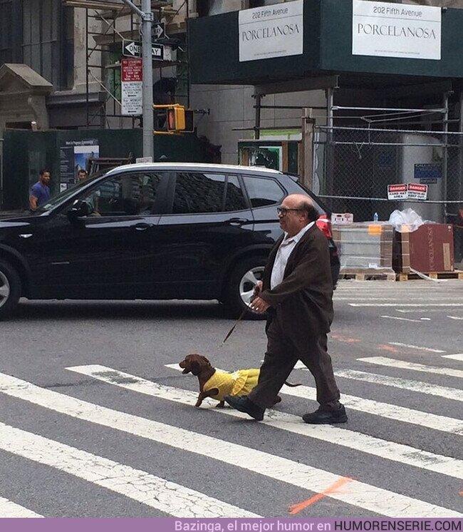 60153 - Danny DeVito paseando a su perro por NYC