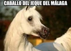 Enlace a Este caballo tiene un valor superior a cualquier jugador de futbol