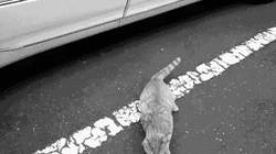 Enlace a GIF: El gato de Busquets