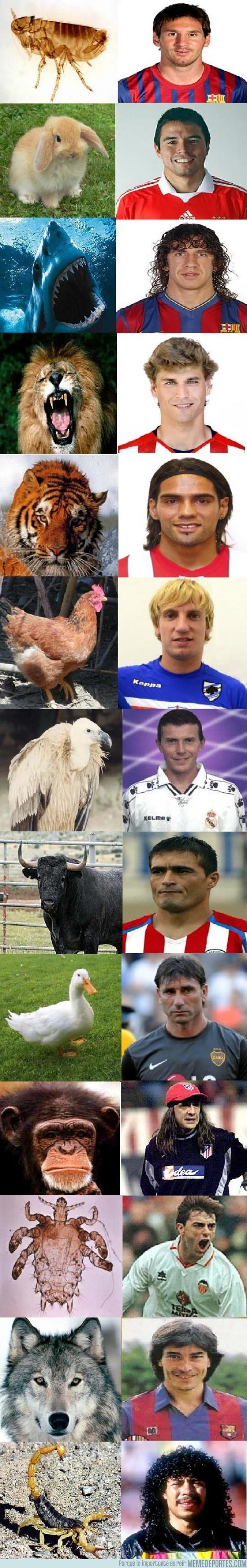 27711 - Futbolistas animales