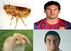 Enlace a Futbolistas animales
