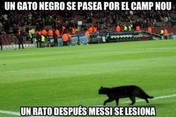 Enlace a Un gato negro se pasea por el Camp Nou