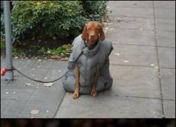 Enlace a El perro de Arsene Wenger