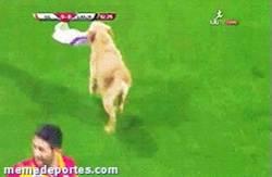 Enlace a GIF: Un par de perros muy adorables se cuelan en un partido del Galatasaray