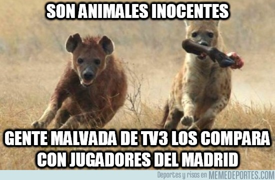 81231 - Son animales inocentes
