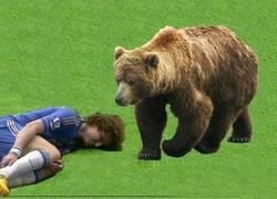 Enlace a Cómo hacerse el muerto ante un oso