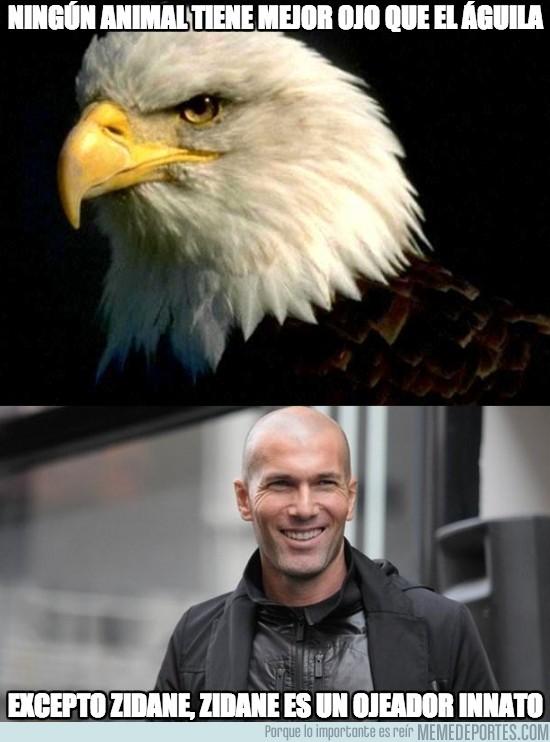 141766 - Ningún animal tiene mejor ojo que el águila
