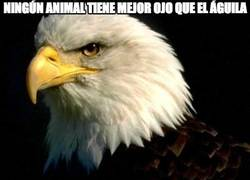 Enlace a Ningún animal tiene mejor ojo que el águila