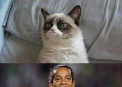 Enlace a Ni Grumpy Cat se resiste