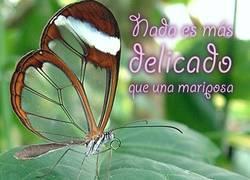 Enlace a Nada es más delicado que una mariposa