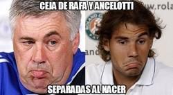 Enlace a Cejas de Rafa Nadal y Ancelotti