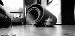 Enlace a GIF: El gato de Éver Banega