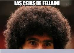 Enlace a Las cejas de Fellaini