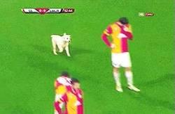 Enlace a GIF: La estrategia del Galatasaray para ablandar al rival en Champions