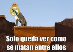 Enlace a Al Madrid solo le queda ver cómo se matan entre ellos