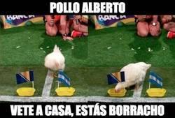 Enlace a Según el pollo Alberto, Bosnia ganará a Argentina