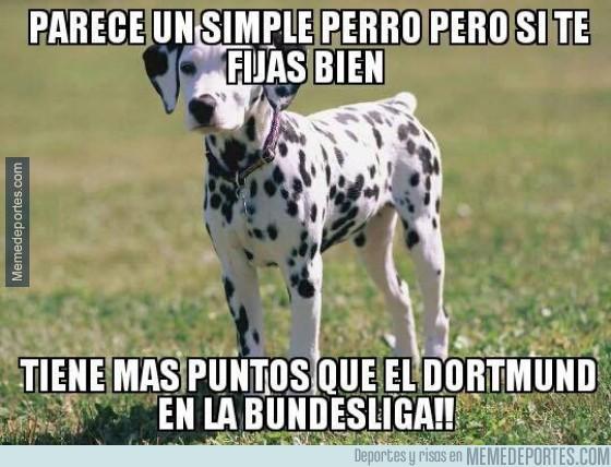 444876 - Parece un simple perro