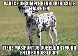 Enlace a Parece un simple perro