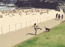 Enlace a GIF: El perro que todos queremos
