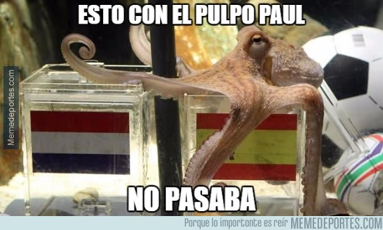 494966 - Con el pulpo Paul todo era distinto