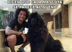 Enlace a Marcelo y su mascota, parecidos razonables