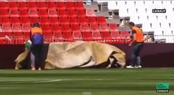 Enlace a GIF: Empleado del estadio del Almería es víctima del viento