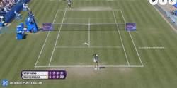 Enlace a GIF: ¿Un partido de tenis aburrido? Pues entra una gaviota asesina