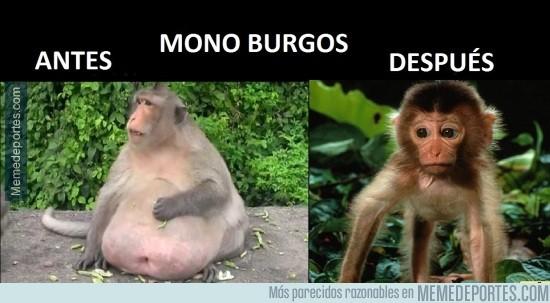 645556 - El antes y el después del Mono Burgos
