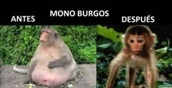 Enlace a El antes y el después del Mono Burgos