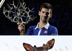 Enlace a Curioso trofeo para Djokovic