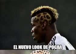 Enlace a Perspectivas del peinado de Pogba