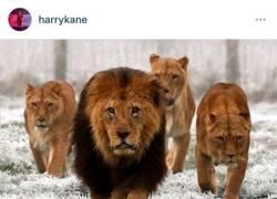 Enlace a La épica respuesta de Vardy a Harry Kane en Twitter