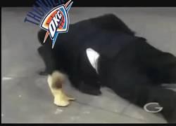 Enlace a GIF: Los Thunder Aplastan a los Warriors,