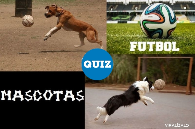 866266 - QUIZ: ¿Puedes reconocer a estas mascotas de los mundiales y eurocopas fútbol?