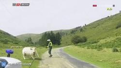 Enlace a GIF: Un guardia civil saca una vaca de la carretera en la vuelta
