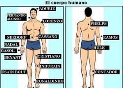 Enlace a Aprende anatomía con deportistas
