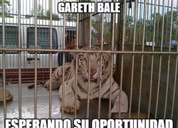 Enlace a Bale esperando para entrar