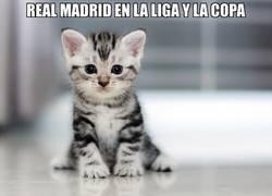 Enlace a Descripción gráfica del Real Madrid esta temporada