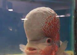 Enlace a Si Vincent Kompany fuera un pez